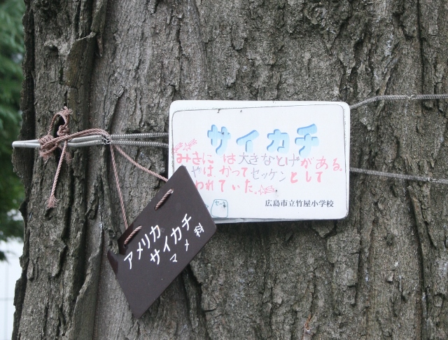 IMG_9235 樹木名「サイカチ」(640x485)