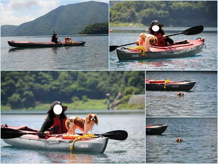 2010年7月20日カヌー犬