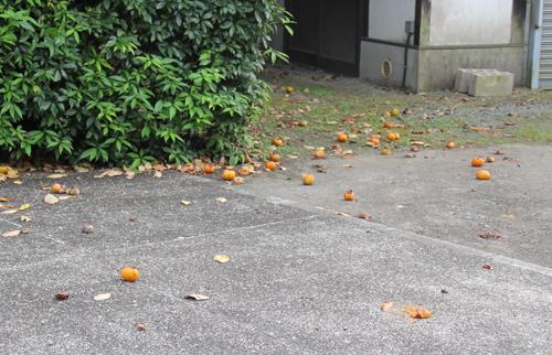 落下した柿