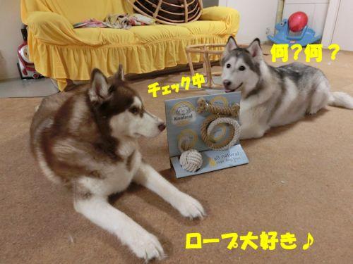 2014071502.jpg