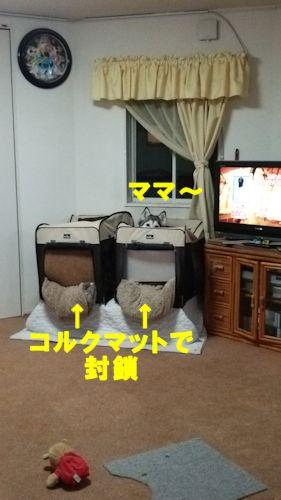 2014112502.jpg