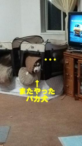 2014112701.jpg