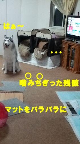 2014112703.jpg