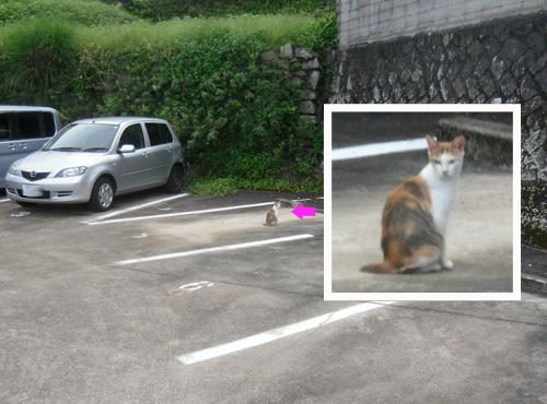 本日のネコ発見!