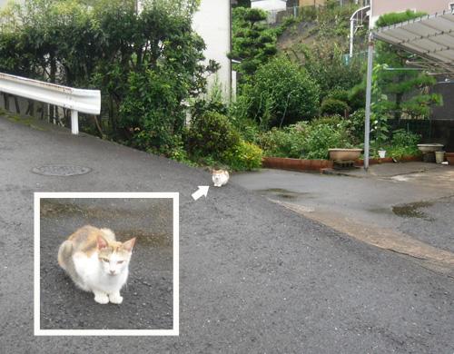 ネコ発見。昨日と同じやつだね。