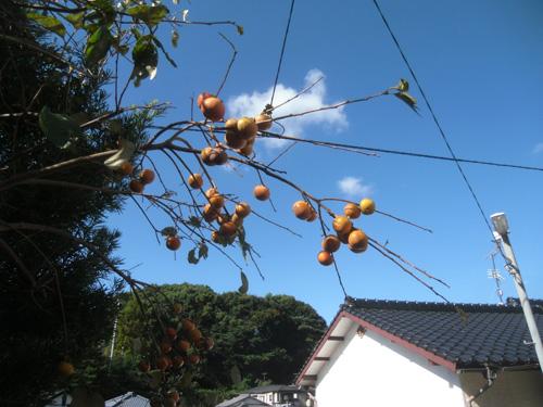 秋の味覚!?