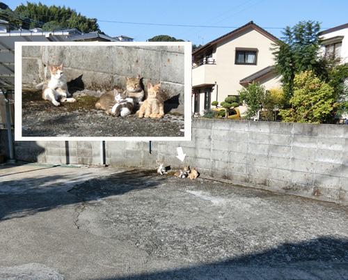ネコ家族。
