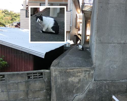 ネコ発見!