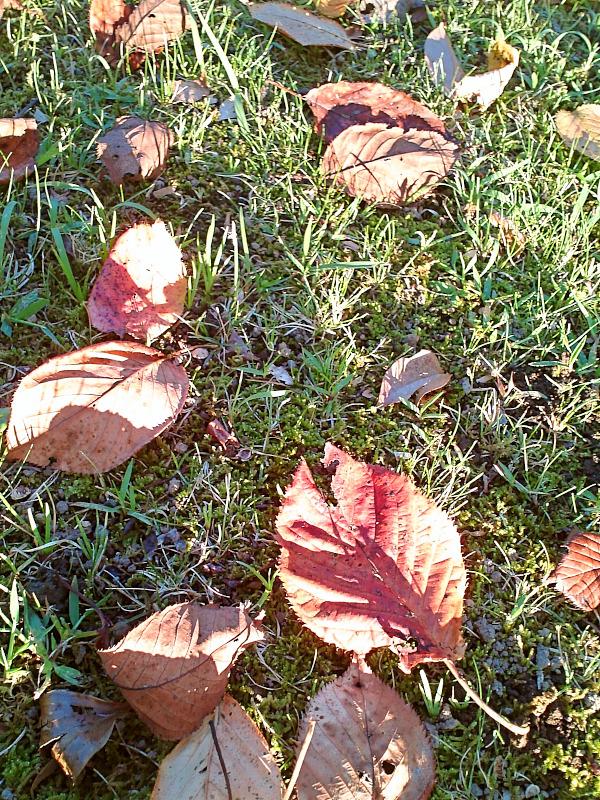 秋を色づいた葉で感じています