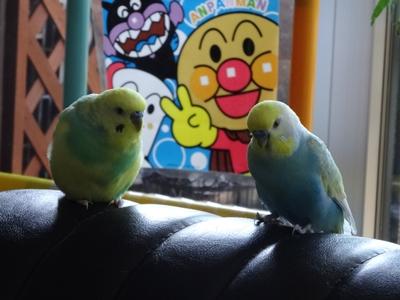 ソファーの2羽さん