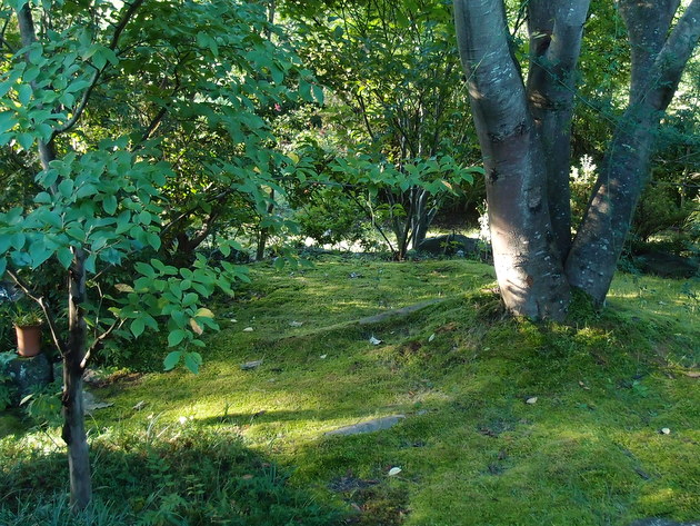 苔を照らす朝日