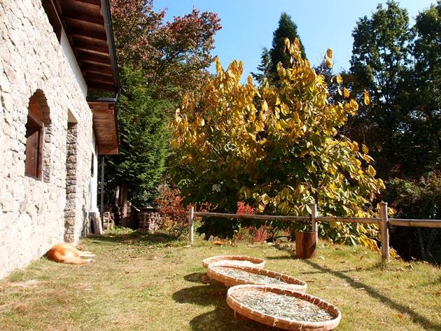 秋の干し物