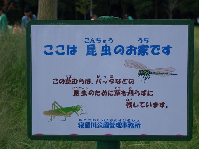 昆虫のお家_R