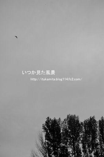 DS7_9534wi-ss.jpg