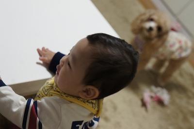 2015,9,20しゅわ3