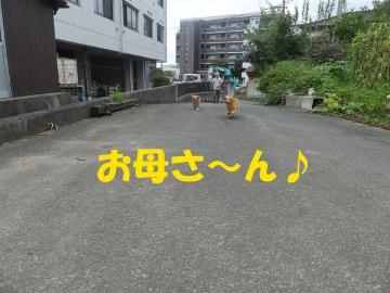 お外行きた~い!4