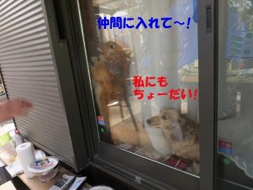 テレビ東京7