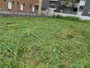 草を刈らねば17