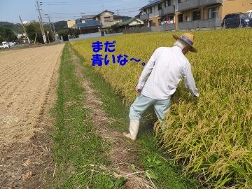 稲刈り揚田上