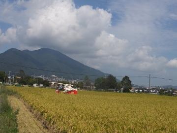 稲刈り揚田上3