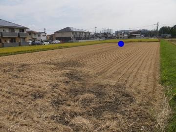 稲刈りれんげ米を