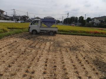 稲刈りれんげ米を3