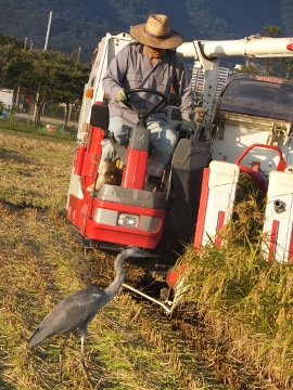 稲刈り終了27年4