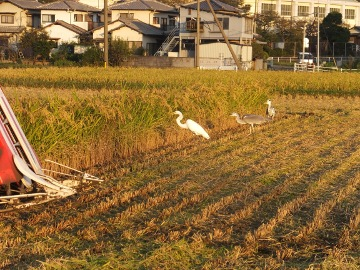 稲刈り終了27年5