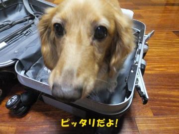 スーツケース好き♪