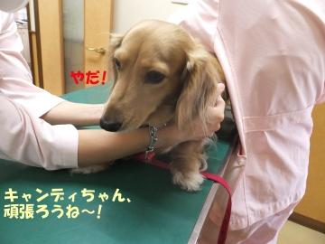動物病院でカット6