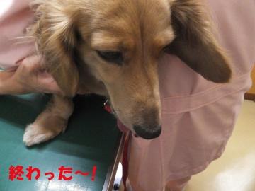 動物病院でカット11