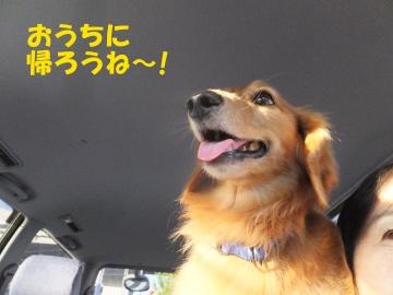 山梨から東京へ14