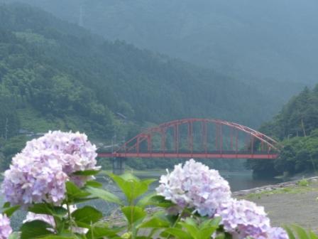 金砂湖畔公園 紫陽花