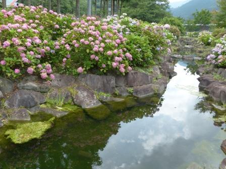 下長瀬アジサイ公園 紫陽花 3