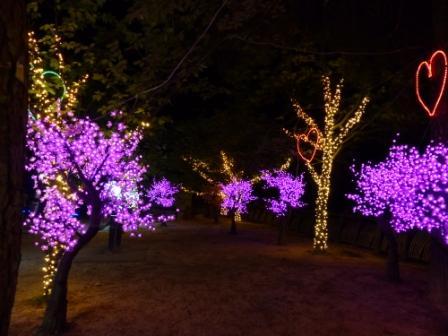 光のおもてなし in 松山城 7