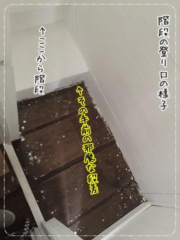IMG_3709.jpg