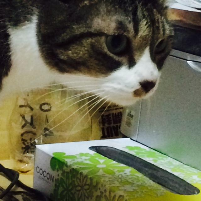 ティッシュ箱2