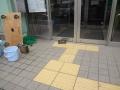 亀vs自動ドア