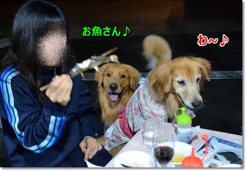 DSC_3050_20150827110548ca0.jpg