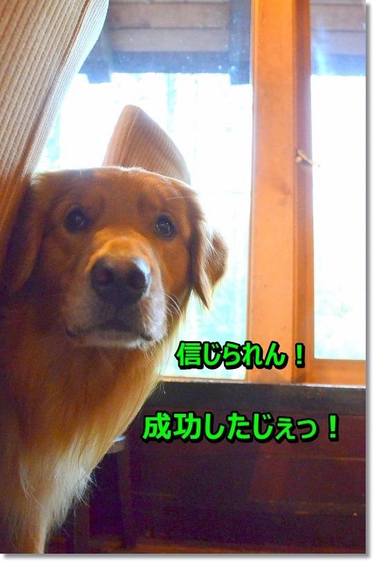 DSC_3154_20150828204929e5c.jpg