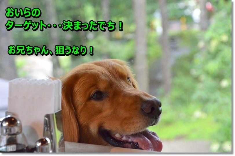 DSC_3156_201508282049317c5.jpg