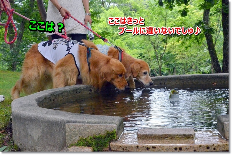 DSC_3824_201509101145589ff.jpg