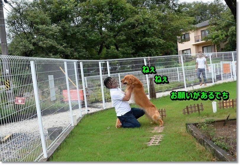 DSC_5099_20150905194922d62.jpg
