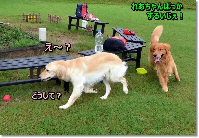 DSC_5156_201509051950034eb.jpg
