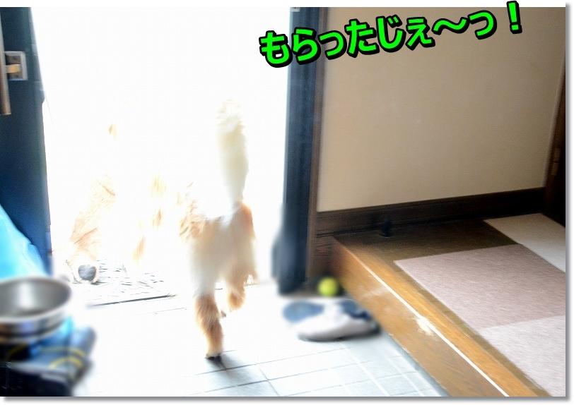DSC_5386_20150903163910b12.jpg