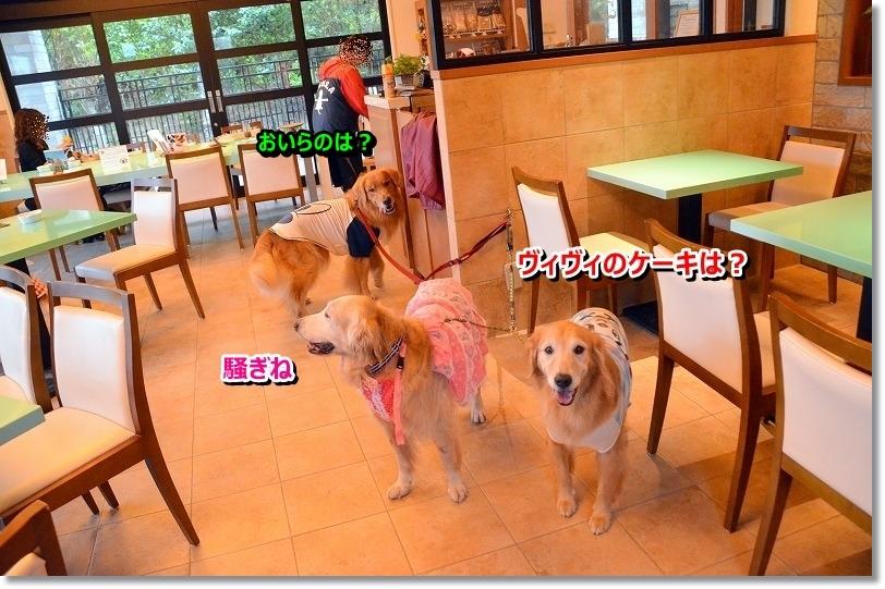 DSC_6044_201510082201580c4.jpg