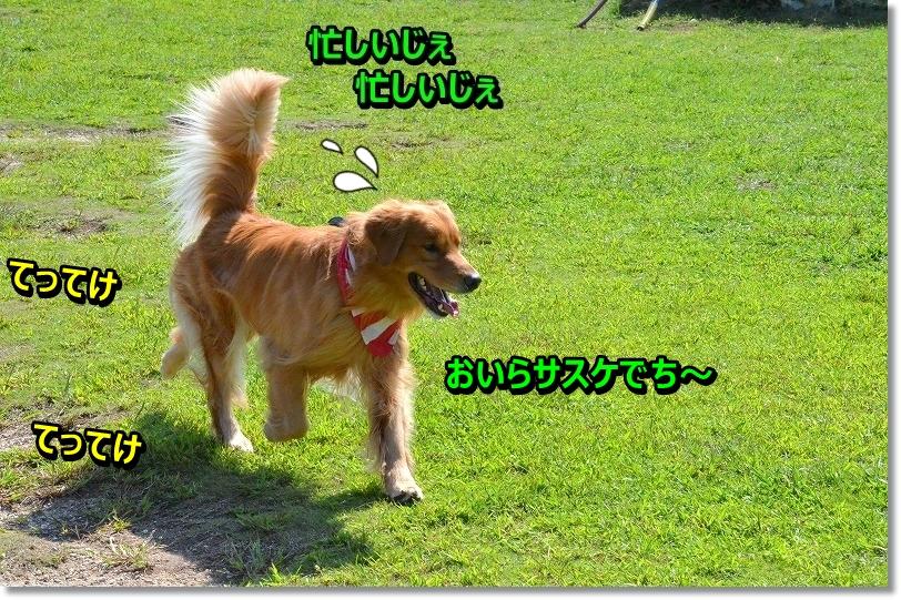 DSC_6071_201509282332516ed.jpg