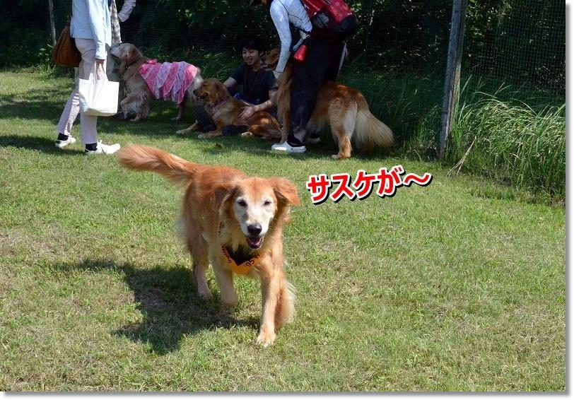 DSC_6100_201509300027128a1.jpg