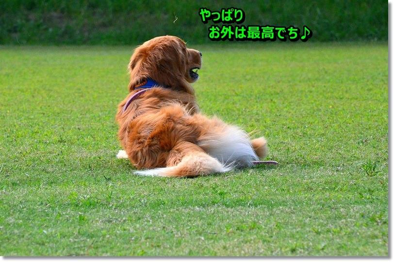 DSC_6361_20151010202447f05.jpg