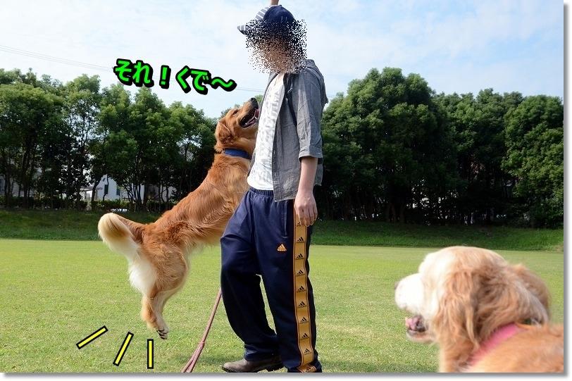 DSC_6395_20151010202543255.jpg